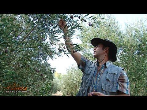 Rhebokskraal Olive Estate – Africa Travel Channel