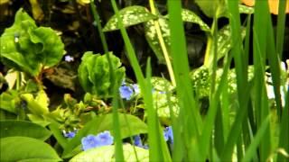 オルベールの花たち 予告編