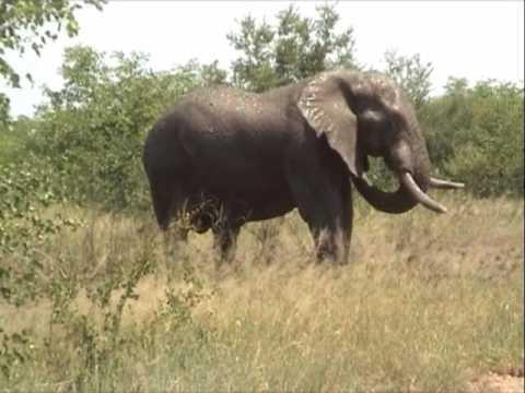 Douche d'Elephants au Parc Krüger en Afrique du Sud