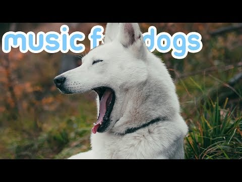 Dog Music! Chill Your Anxious Dog with the BEST Relaxing ASMR Music! NEW 2020!