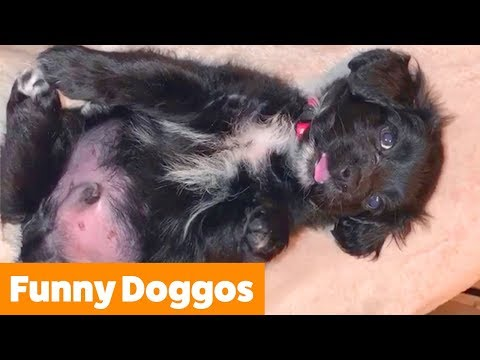 Cute Funny Dogs | Funny Pet Videos