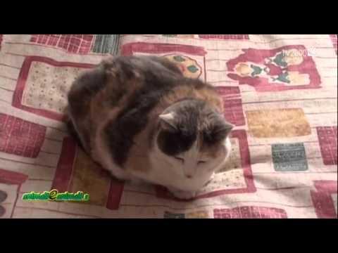 Come tenere lontano il gatto dalle piante animali dal mondo - Allontanare i gatti dal giardino ...