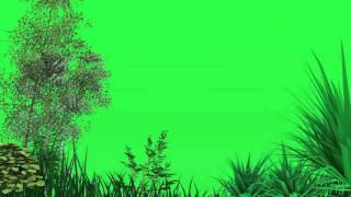 green screen trees blowing in the wind