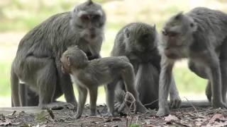 Funny Monkey When Togetherness in Jungle | LIVE!!