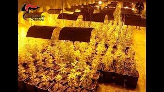Scoperta maxi-serra di marijuana a Poggioreale : arrestati due fratelli