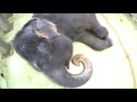 Sloní videoblog