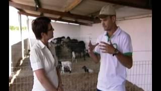 Globo Rural tratando sobre mastite nas Ovelhas (Caso de sucesso da Fazenda Tamanduá)
