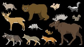 North American Forest Mammals - Forest Animals - The Kids' Picture Show (Fun & Educational)