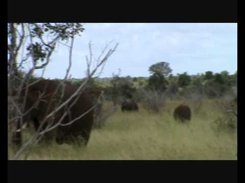 Last video from South Africa – Elephants!