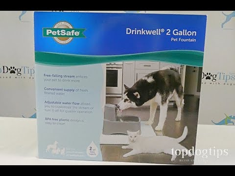PetSafe Drinkwell Fountain for Dogs Review