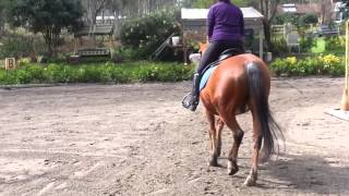 Johnson Equestrian | Coach training Two and three point assessment at walk trot Canter