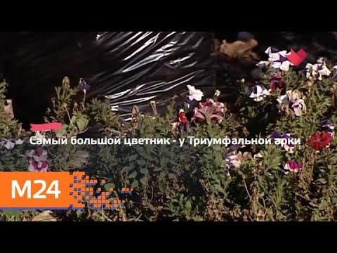 """""""Это наш город"""": в столице в 2019 году посадят около 10 миллионов цветов - Москва 24 photo"""