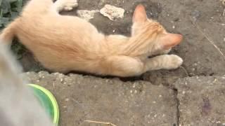 Little Tomcat suffering of the heat...