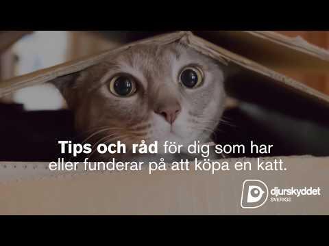 Funderar du på att köpa katt?