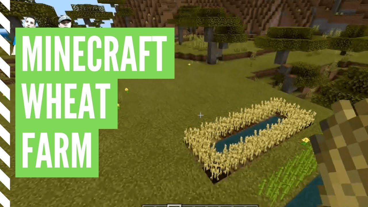 How To Get Wheat In Minecraft (Minecraft Wheat Farm)