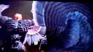 Free Birds- butt scenes (reuploaded)