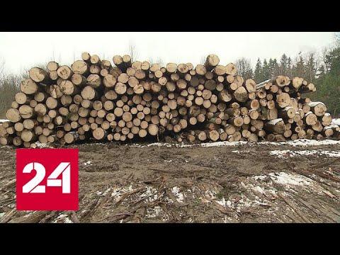 Жители Клина встали на защиту местного леса