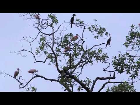 Birdwatching Mangrove Adventures