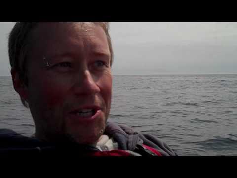 ( Orca ) Killer Whales swim under our kayaks