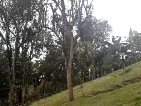Ecuador-Caluma recorrido by Dayler Vera Moyano