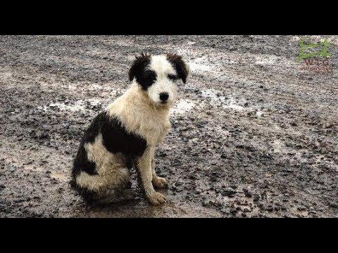 Tierschutz in Rumänien: Kastrationen retten Streunerleben