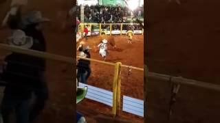 Rodeio ouro verde do oeste 2017 - touro hip hop da santa maria