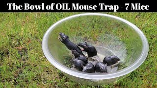 A Bowl Of Peanut Oil Catches 7 Mice In 1 Night - Motion Camera Footage