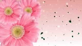 Animated Flowers Blooming Background