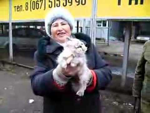 Nikolaev Humane Society