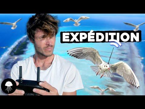 Cet oiseau prédira les catastrophes ? (expédition) - DBY #81