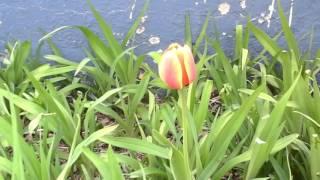 Una hemrosa flor en mi jardín descuidado