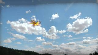 Flower Animation Intro