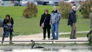 Black Swan sur CANAL+