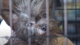More Than 100 Animals Rescued from Arkansas Puppy Mill
