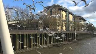 Slow Motion Seagulls Sound Horrific
