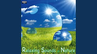 Healing Waters - Music and Nature Sounds for Massage, Reiki, Yoga and Relaxation