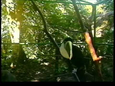 Hosteria el paraiso de las orquideas tena ecuador