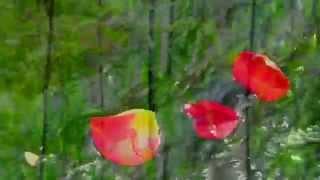 EnSecreto - Cada hoja fluye - VIDEOCLIP