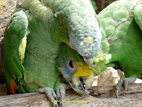 2012 Ecuador   Cuenca, Zoo de la Banco Central, Perroquet, Loro, Parakeet, Guacamayo, Ara, Macaw