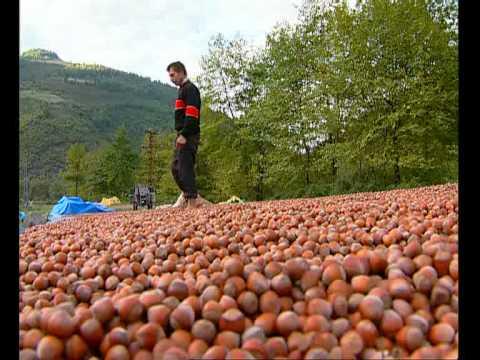 Samsun Turizm Merkezi - Tarım ve Gıda Sanayi Merkezi