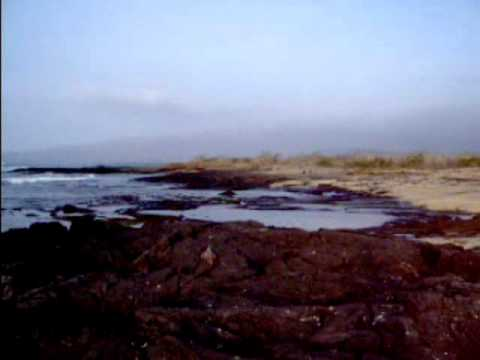 Galapagos Land and Sea part 1 Land.wmv