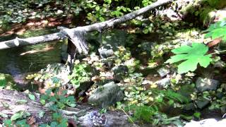 Project Serenity | Mountain Streams and Sunlight - Great for meditation and relaxation!