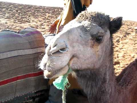 camel rest stop