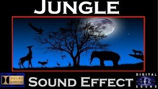 Jungle Sound Effect   JUNGLE AMBIANCE   HI-RES AUDIO