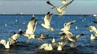 Julio Iglesias - Vuela alto.wmv