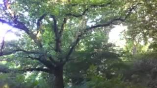 New Woodland Song © Linda Lamon