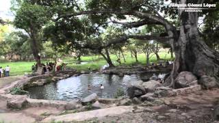 Ojos de agua en Pantanal Nayarit.