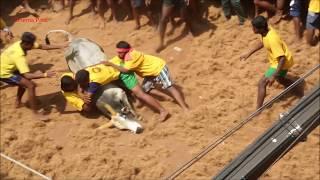 மனதை உலுக்கும் காட்சிகள் | Highlights of Avaniyapuram Jallikattu - களத்தை ரணகளமாக்கிய வீரக்காளைகள்
