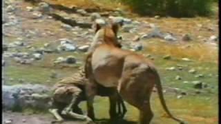 Vida selvagem na Africa.avi