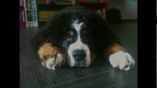 Lupita's Project - Idolo del mio cane.